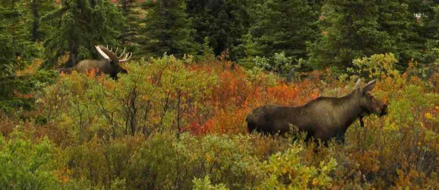 The Money Moose Survey