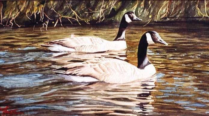 geoff butterworth geese