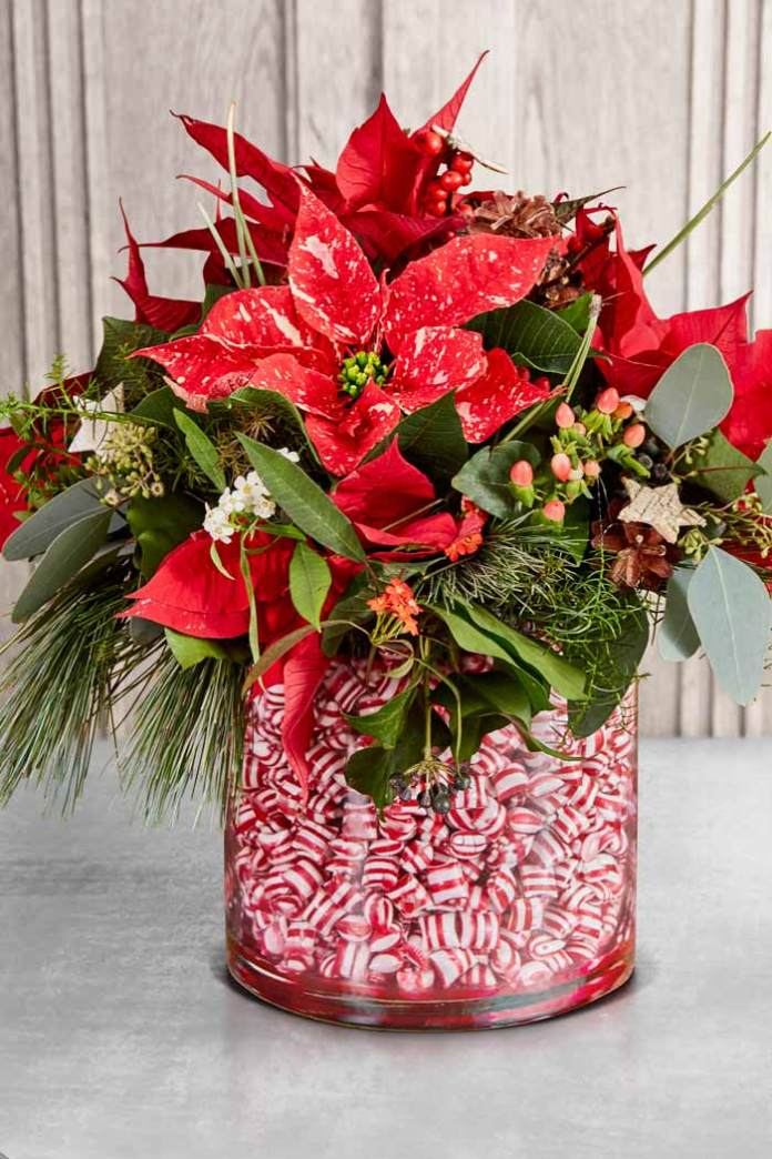 Poinsettia Sweet Treats