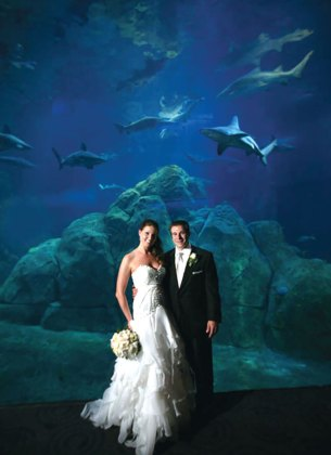 Aquarium wedding