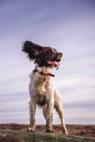 Andrew Whitham - bond between dog and owner