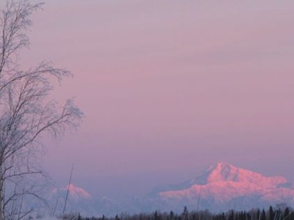 Denali from Willow