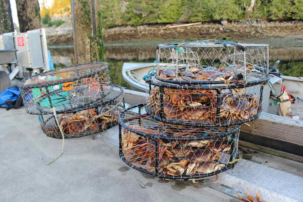 Five full crab traps stacked in two piles on a dock with water and evergreens in the background.