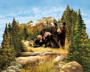 Majestic Outdoors - Bears