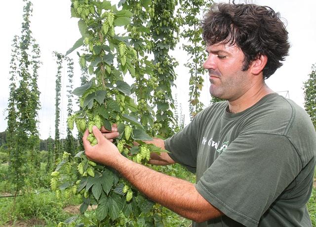 long ireland wet hops condzella farm