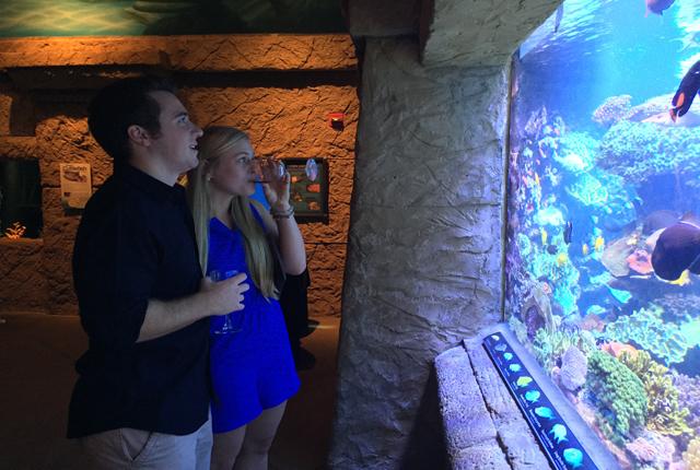 Fish & Sips Long Island Aquarium