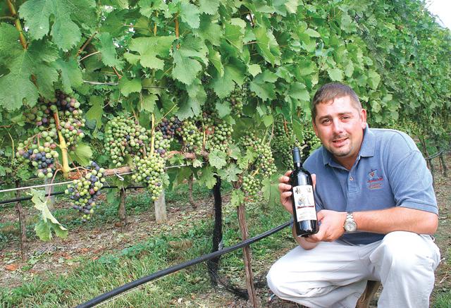 Jason's Vineyard