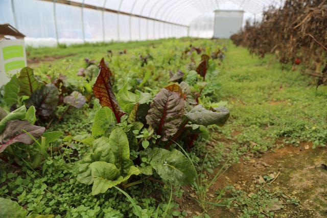 MarGene Farm