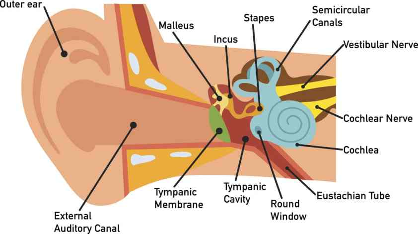How You Hear - Northland Audiology