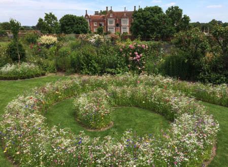 06 Meadow Planting in Your Garden_3