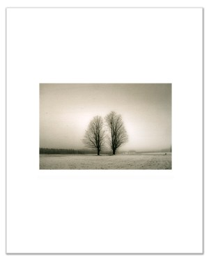 "Bill Schwab – ""Two Maples – Emmet County 2021"" (small print)"