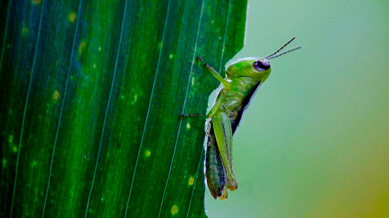 Stop Garden Pests in their Tracks with Mosquito Barrier