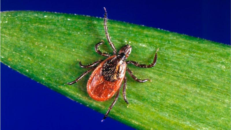 Threat of Ticks