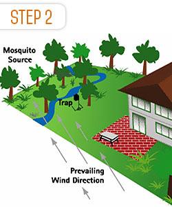 step-2-mosquito-control