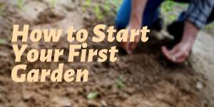 How to Start Your First Garden