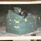 Bear in Dempsey Dumpster trash can at parking lot in Lake Tahoe Condo