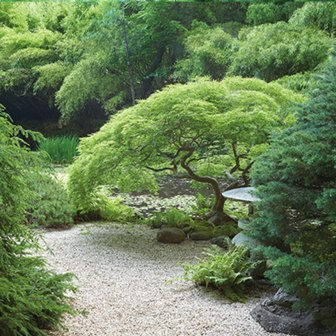 Humes-Japanese-Stroll-Garden-Tree_1040
