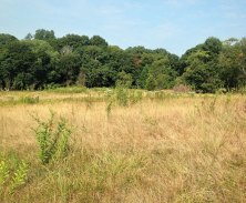 Tiffany-Cree-Preserve-meadow_1040