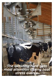 Cows under a sprinkler.