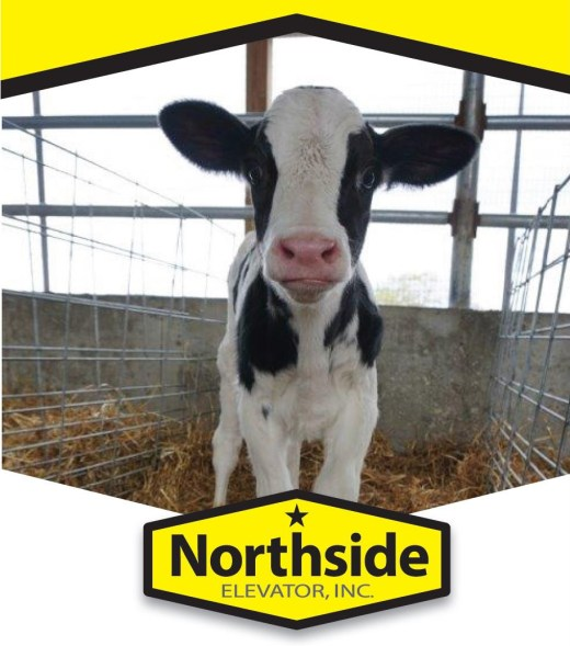 Calf and Heifer Program and Products – Northside Elevator, Inc