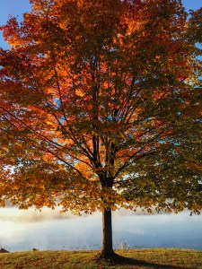 Maintaining Wellness in the Fall & Winter