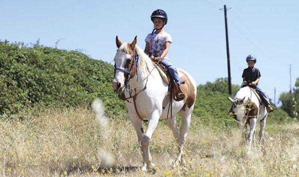 art-0913-horses1