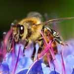 Kids Can Help  Save the Honey Bees