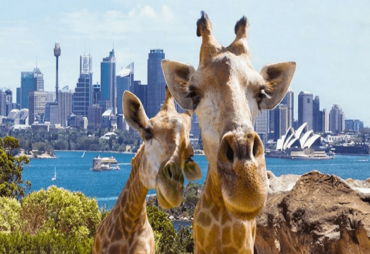 Taronga Zoo - Manly Beach Tour-North Sydney Limousine Corporate Cars
