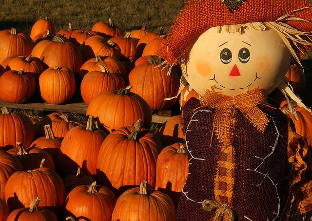 Pumpkin Patch Dallas Ft. Worth
