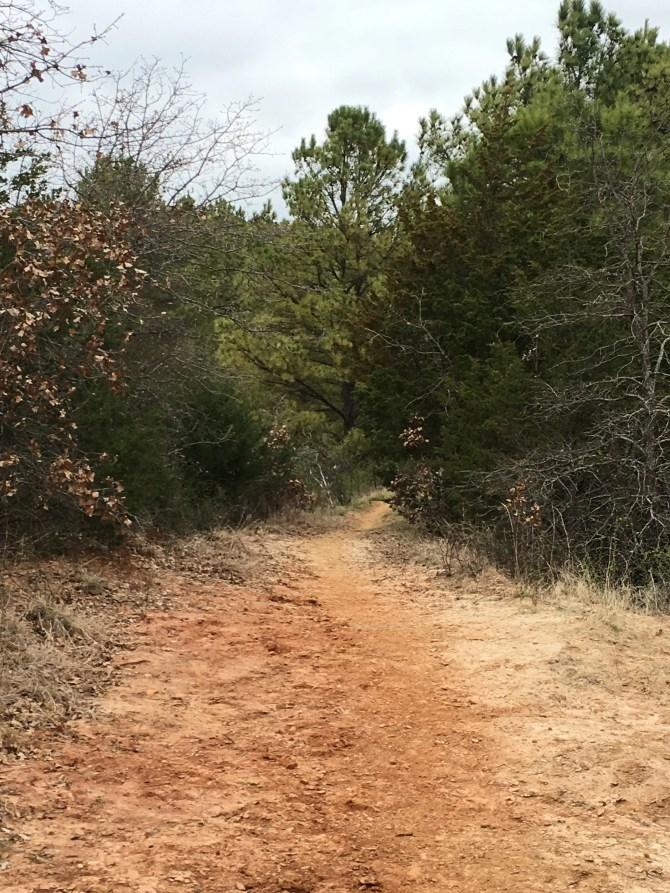 Trail by Spruce at LBJ Grasslands