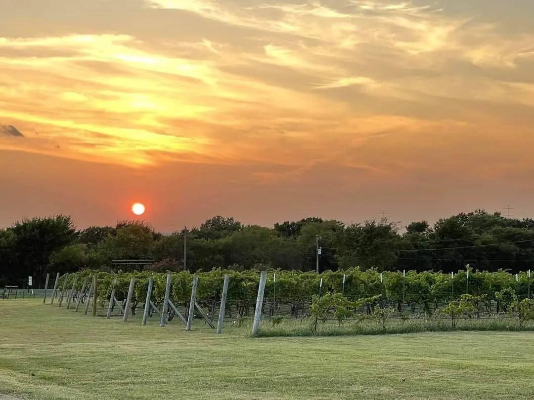 Sunset - Caudalie Crest