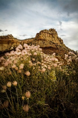 Capitol Reef National Park plant life on northtosouth.us
