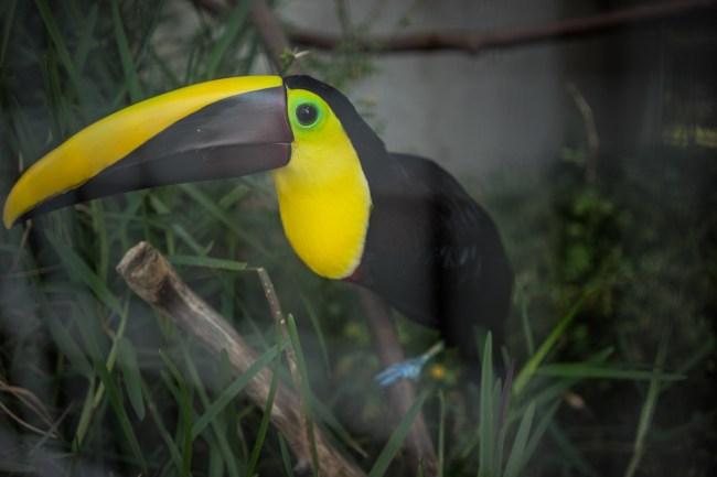 a toucan at the Toucan Rescue Ranch Costa Rica