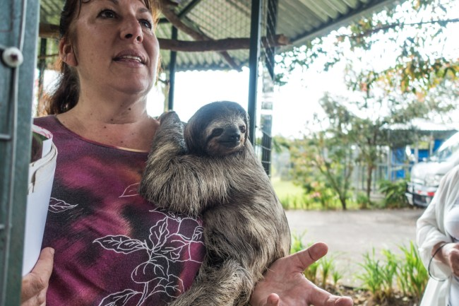 Leslie, Director of the Toucan Rescue Ranch, with a three-toed female sloth