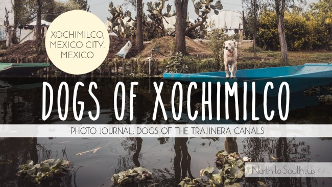 The Dogs of Xochimilco, Perros de Xochimilco, along the trajinera canals (Mexico City, Mexico)