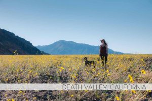 Death Valley, California Superbloom