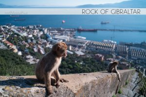 Monkeys (Macaques) at the Rock of Gibraltar