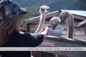 OstrichLand USA, Solvang, California