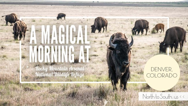 A Magical Morning at Rocky Mountain Arsenal National Wildlife Refuge (Denver, Colorado)