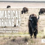 A Magical Morning at Rocky Mountain Arsenal National Wildlife Refuge