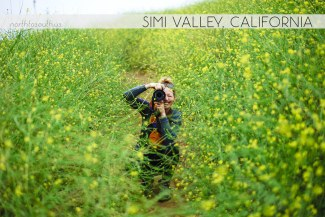 North to South's Year in Review 2019 | Simi Valley wildfire regrowth