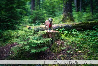 North to South's Year in Review 2019 | Camping with Tiger in The Pacific Northwest