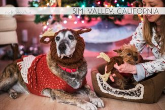 North to South's Year in Review 2019 | Christmas in Simi Valley, Reindeer Dogs