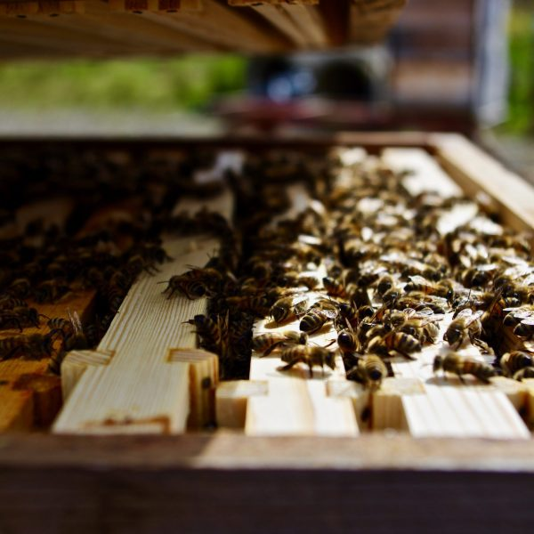 Northumberland Honey Co Bees