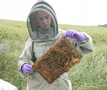 Beekeeping Experience | Honey gifts and bee experience