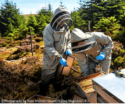 Beekeeping on the Heather Moors Northumberland