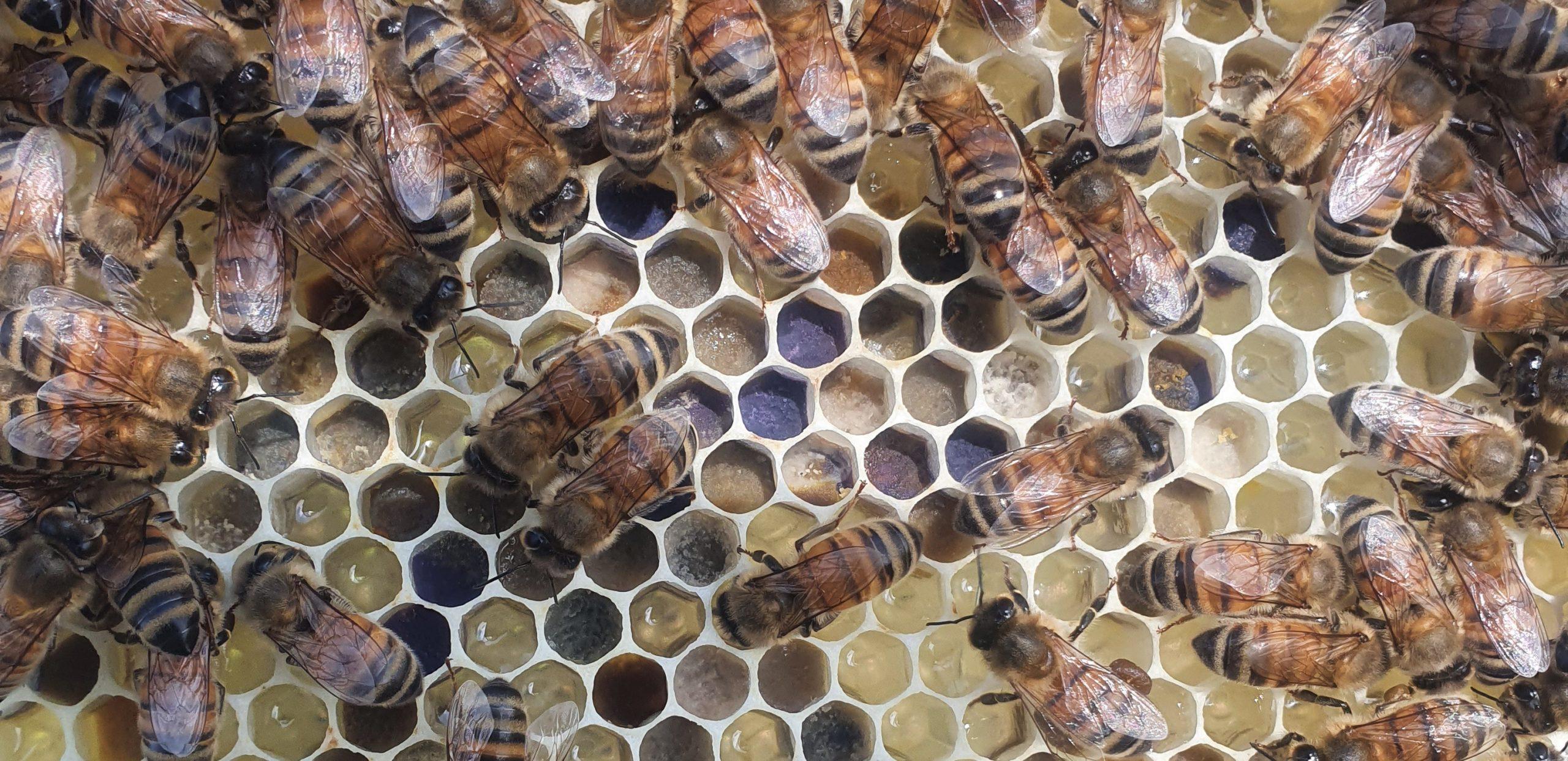 What is Organic Raw Honey