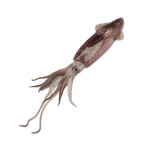 squid-rs