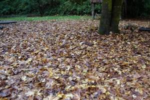 leaf clean-up