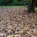 leaf clean-up